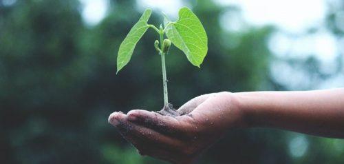 carbon-offset-grow-trees